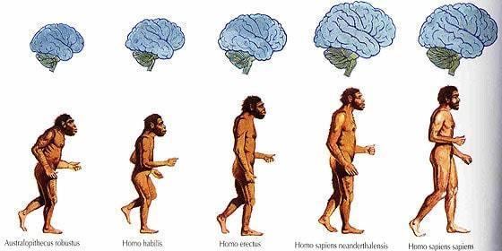 homo-evolucion-min
