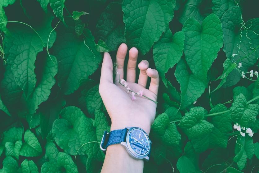 Cómo emprender en verde: pasos y ejemplos